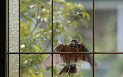 How to Recognize and Stop Self-Defeating Behaviors. Lessons From The Bird at My Window