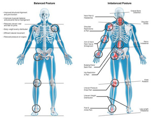 Take Responsibility and Know Your Own Body - Basic Human Anatomy