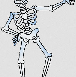 Postural Lessons From a Skeleton